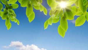 cropped-listochki-na-fone-neba-leaflets-on-a-background-of-the-sky.jpg
