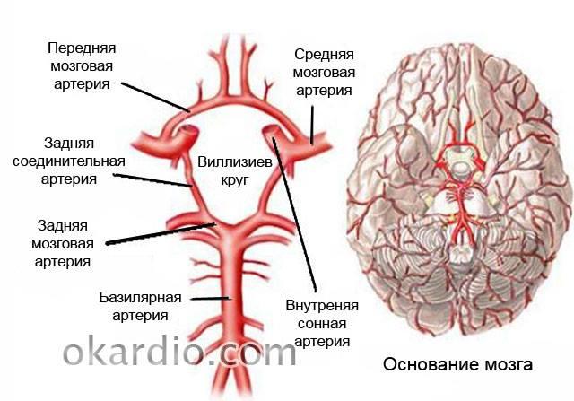 Медицинские мифы: остеохондроз не вызывает гипертонию